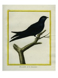 Chimney Swift Giclee Print by Georges-Louis Buffon