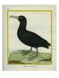 Chinese Albatross Giclee Print by Georges-Louis Buffon