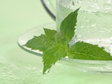 Peppermint Tea in a Glass Cup Photographic Print by Achim Sass