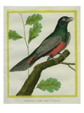 Elegant Trogon Giclee Print by Georges-Louis Buffon