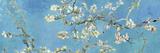 Mandelgrenar i blom, San Remy, ca 1890 Posters av Vincent van Gogh