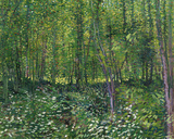 Trees and Undergrowth, c.1887 Art by Vincent van Gogh