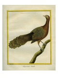 Green Peahen Reproduction procédé giclée par Georges-Louis Buffon