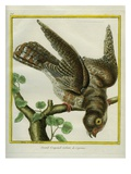 Cayenne Nightjar Giclee Print by Georges-Louis Buffon