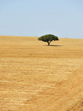 Holm Oak in the Vast Plains of Alentejo, Portugal Photographic Print by Mauricio Abreu