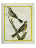 Meadow Pipit And Giclee Print by Georges-Louis Buffon