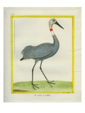 Sarus Crane Giclee Print by Georges-Louis Buffon