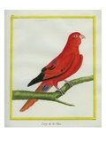Blue-Streaked Lory Giclee Print by Georges-Louis Buffon
