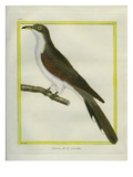 Yellow-Billed Cuckoo Reproduction procédé giclée par Georges-Louis Buffon