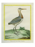African Snipe Reproduction procédé giclée par Georges-Louis Buffon