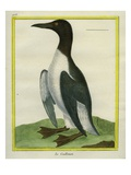 Common Murre Reproduction procédé giclée par Georges-Louis Buffon