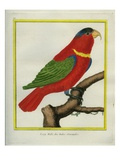 East Indian Lorikeet, Male Giclee Print by Georges-Louis Buffon