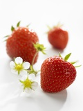 Three Strawberries Photographic Print by Klaus Arras
