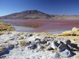 Laguna Colorada on the Altiplano, Potosi Department, Bolivia Photographic Print by Ian Trower