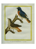 Male and Female Nightingale Giclee Print by Georges-Louis Buffon