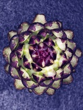A Purple Artichoke Photographic Print by Hermann Mock