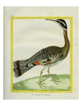 Sunbittern Giclee Print by Georges-Louis Buffon