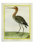 Nordmann's Greenshank Giclee Print by Georges-Louis Buffon