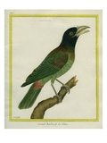 Great Barbet Giclee Print by Georges-Louis Buffon