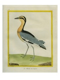 Senegal Lapwing Giclee Print by Georges-Louis Buffon