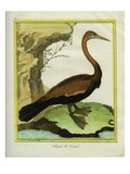 Senegalese Anhinga Reproduction proc&#233;d&#233; gicl&#233;e par Georges-Louis Buffon