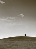 Italy, Tuscany, Siena District, Orcia Valley, Alone Tree Photographic Print by Francesco Iacobelli