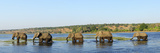 Elephants Walking Through Chobe River, Chobe National Park, Near the Town of Kasane, Botswana, Sout Photographic Print by Christian Heeb