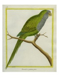Monk Parakeet Giclee Print by Georges-Louis Buffon
