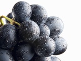 A Bunch of Black Grapes with Drops of Water Photographic Print by Simon Krzic