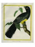 White-Tailed Trogon Giclee Print by Georges-Louis Buffon