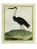 White-Necked Heron Giclee Print by Georges-Louis Buffon