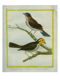 Yellowhammer and Cape Bunting Giclee Print by Georges-Louis Buffon