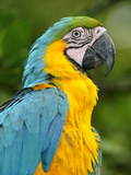 Colourful Macaw, Terradentro, Colombia, South America Photographic Print by Christian Heeb