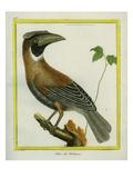 Blyth's Hornbill Impression giclée par Georges-Louis Buffon