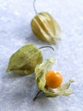 Physalis Photographic Print by Caroline Martin