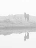 Herd of Horses in the Mist, Iceland Photographic Print by Nadia Isakova