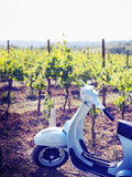 Italy, Umbria, Perugia District, Montefalco, Vespa Scooter in Vineyard Photographic Print by Francesco Iacobelli