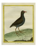 Common Moorhen Giclee Print by Georges-Louis Buffon