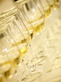 Several Glasses of White Wine for Wine Tasting Photographic Print by Steven Morris