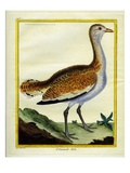 Male Bustard Giclee Print by Georges-Louis Buffon