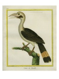Luzon Hornbill Giclee Print by Georges-Louis Buffon