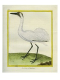 Whooping Crane Giclee Print by Georges-Louis Buffon