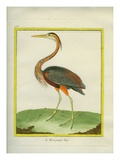 Purple Heron Giclee Print by Georges-Louis Buffon