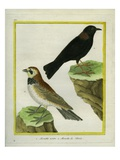 Black Lark And Giclee Print by Georges-Louis Buffon