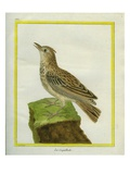 Crested Lark Reproduction procédé giclée par Georges-Louis Buffon
