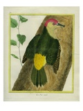 Green Woodpecker Giclee Print by Georges-Louis Buffon