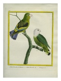 Lilac-Tailed Parrotlet and Grey-Headed Lovebird Giclee Print by Georges-Louis Buffon