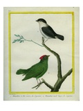 White-Bearded Manakin and Blue-Backed Manakin Giclee Print by Georges-Louis Buffon