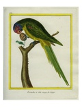 Red-Crowned Parrot Stampa giclée di Georges-Louis Buffon