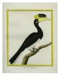 Rufous Hornbill Giclee Print by Georges-Louis Buffon